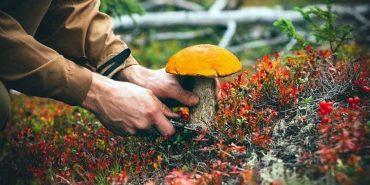 На Франківщині шукають заблукалого грибника