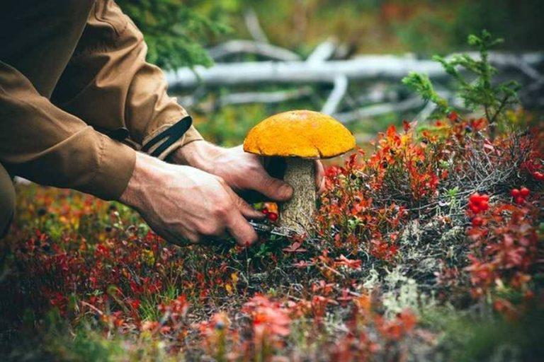 Фахівці нагадують правила споживання грибів