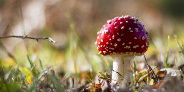 На Прикарпатті 15-річна дівчина отруїлася грибами