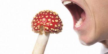На Прикарпатті ще шестеро осіб отруїлися грибами, серед яких дворічна дитина