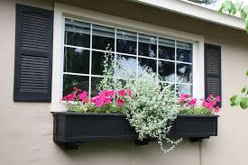 У Коломиї шукають крадіїв віконних квітів