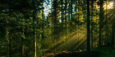 В лісі на Франківщині загубився грибар