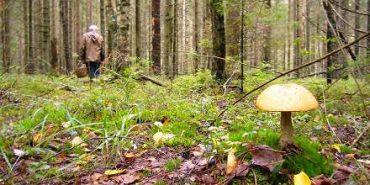На Прикарпатті заблукали в лісі два грибарі
