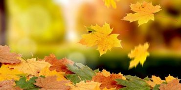 22 вересня – день осіннього рівнодення. ПРИКМЕТИ