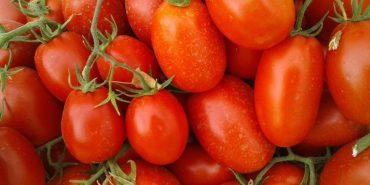 165 помідорів з одного куща: в Україні зафіксували рекорд
