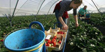 Кожен п'ятий українець у Польщі працює у сільському господарстві