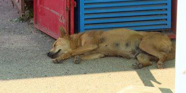 У Коломиї через місяць розпочнуть будівництво притулку для тварин. ВІДЕО