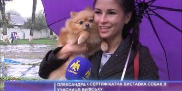 На Прикарпатті відбулася виставка собак. ВІДЕО