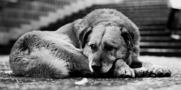 На Франківщині отруїли собак – люди звернулися в поліцію