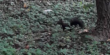 Фото дня: у парку ім. Трильовського живуть білки