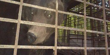 Стала відома подальша доля ведмедя, якого утримували в жахливих умовах на Коломийщині