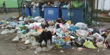 Коломияни обурені неякісним вивезенням сміття в місті. ФОТО