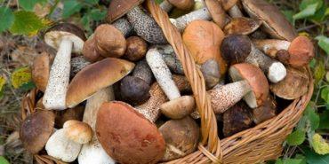 На Франківщині двоє людей отруїлися грибами