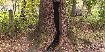 У Коломиї в міському парку вже не вперше підпалюють дерево. ВІДЕО