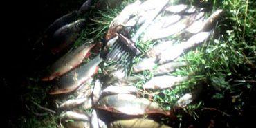 На Прикарпатті затримали браконьєрів, які набили риби на 10 тис. грн