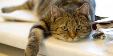 В Україні планують ввести податки на собак і котів