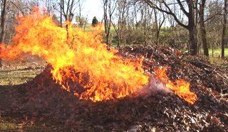"""На сайті """"Дзеркала Коломиї"""" триває опитування """"Що робити з коломиянами, які масово спалюють листя і сміття?"""""""