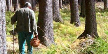 На Франківщині знайшовся грибник, якого добу шукали у лісі