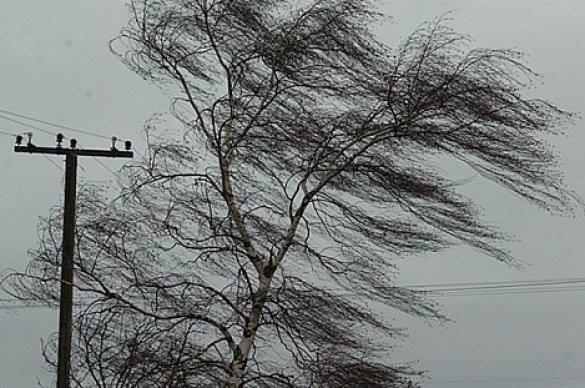 НаФранківщині на8-річного хлопчика впало дерево— дитина вреанімації
