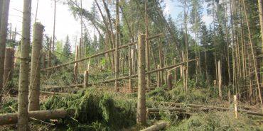 Буревій знищив 70 гектарів лісу в Карпатах. ФОТО