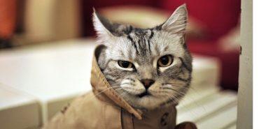 У Японії у спробі вбивства жінки підозрюють кота-безхатька