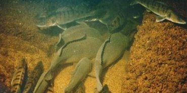 Для прикарпатських рибалок створили інтерактивну карту зимувальних ям на водоймах