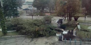 На Прикарпатті сильний вітер зриває дахи та вириває з корінням дерева. ФОТО