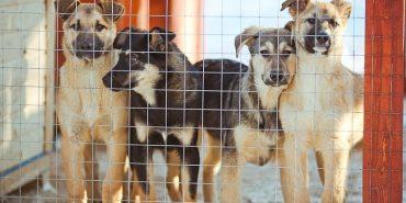 У Коломиї можуть скасувати тендер на будівництво притулку для тварин
