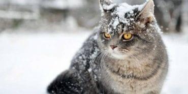 В Україну йдуть сніг і морози: синоптик розказала про зміну погоди