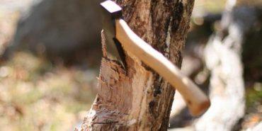Проти прикарпатця відкрили кримінальну справу за одну зрубану сосну