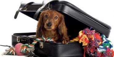 У Держспоживслужбі в Коломиї радять, як перевозити котів та собак в ЄС