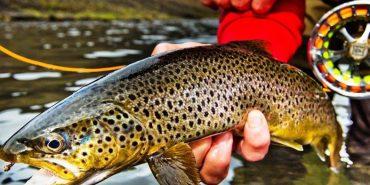 Скільки коштуватиме риболовля для прикарпатця, який спіймав марену? ФОТО