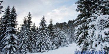Майже 2 метри снігу насипало в Карпатах