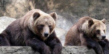 На Прикарпатті центр реабілітації рятує диких тварин. ВІДЕО