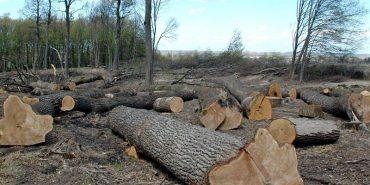У Надвірнянському районі протистоять незаконній вирубці лісу