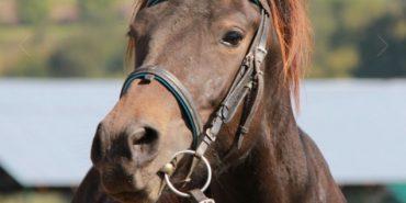 Як на Коломийщині кобила врятувала власника. ФОТО+ВІДЕО
