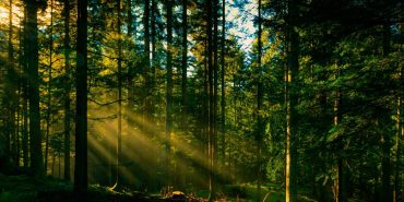 Прикарпаття має свої багатства – ліси. ВІДЕО