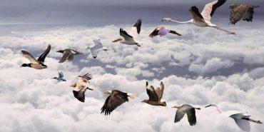 Небайдужі коломияни рятують птахів. ВІДЕО