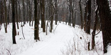 Директор одного із лісових господарств Прикарпаття продав собі лісу на 2 мільйони гривень
