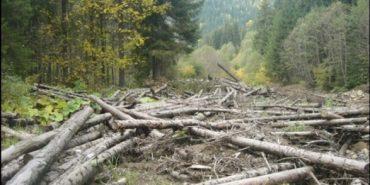 На Прикарпатті викрили зловмисника, який незаконно перевозив зрубану лісодеревину