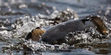 Де можна ловити рибу на Прикарпатті під час нересту