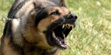 На Прикарпатті виявили сказ в домашнього собаки