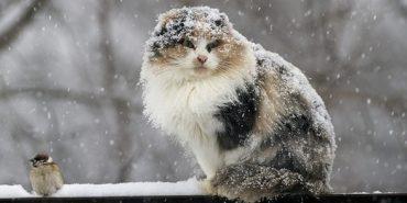 Прикарпатські метеорологи попереджують про можливість шторму на вихідних