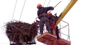 Прикарпатські енергетики встановлять на опорах 50 нових лелечих гнізд