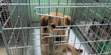 На Калущині провели відлов безпритульних собак. ФОТО