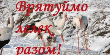 На Коломийщині закликають врятувати лелек: поради екологів