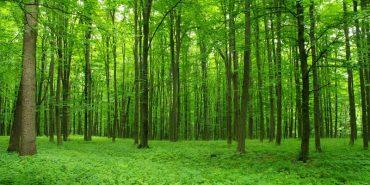 Підприємцям з Прикарпаття надали лісові ділянки в оренду