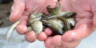 В українських водоймах протягом 30 років може зникнути риба