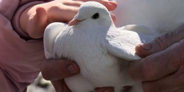 У Коломиї пройшла виставка-ярмарок спортивних та декоративних голубів