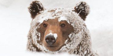 Ведмеді з Галицького нацпарку підкорюють мережу. ВІДЕО